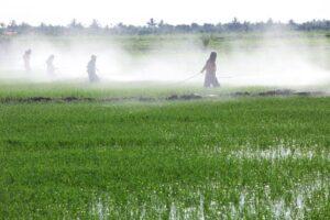 use of pesticides