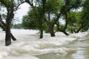 Trees in water of Kosi river flood of Bihar 2008 in Purniya district,Bihar,India Image credit: dinodia / 123rf. water-borne disease concept.
